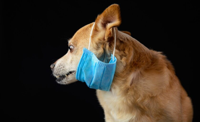 Pies z maseczką ochronną (zdj. ilustracyjne)