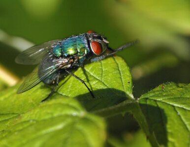 ONZ radzi: jedzcie owady, wygracie z głodem