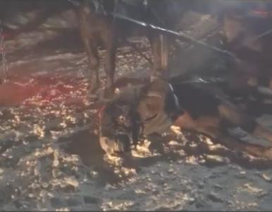 Koń ciągnący kulig padł na oczach turystów. Udostępniono szokujące nagranie