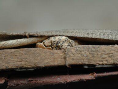 Niezwykłe odkrycie w Muzeum Auschwitz. Znaleziono to przez przypadek