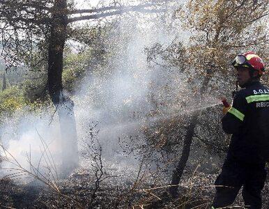 Ogień trawi Sardynię. Trwa ewakuacja