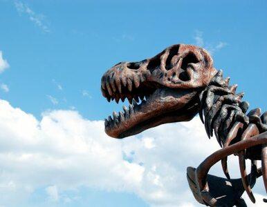 Świat według Polaka: ludzie żyli z dinozaurami, ewolucji nie było