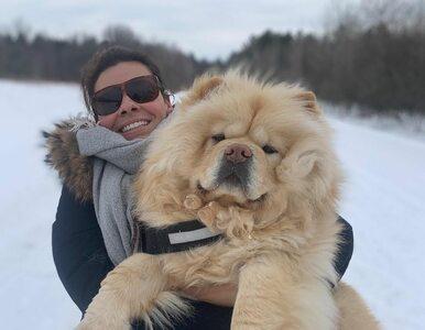 Winston zawojuje Instagram? Puchaty pies ma już rzeszę fanów