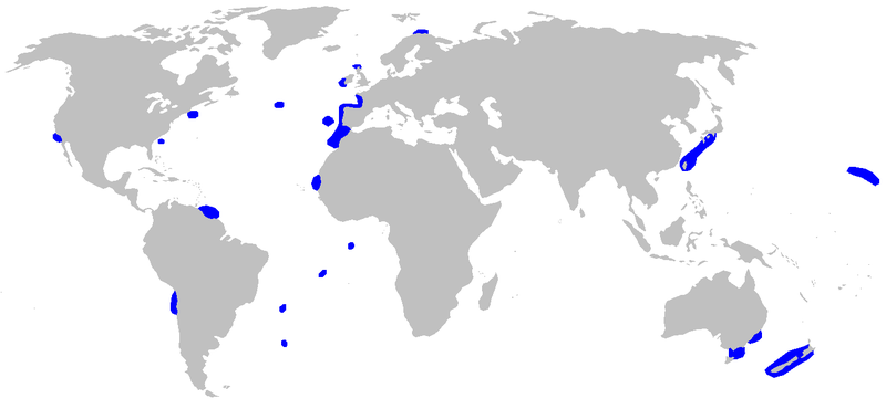 Mapa występowania płaszczaków - Chlamydoselachus anguineus