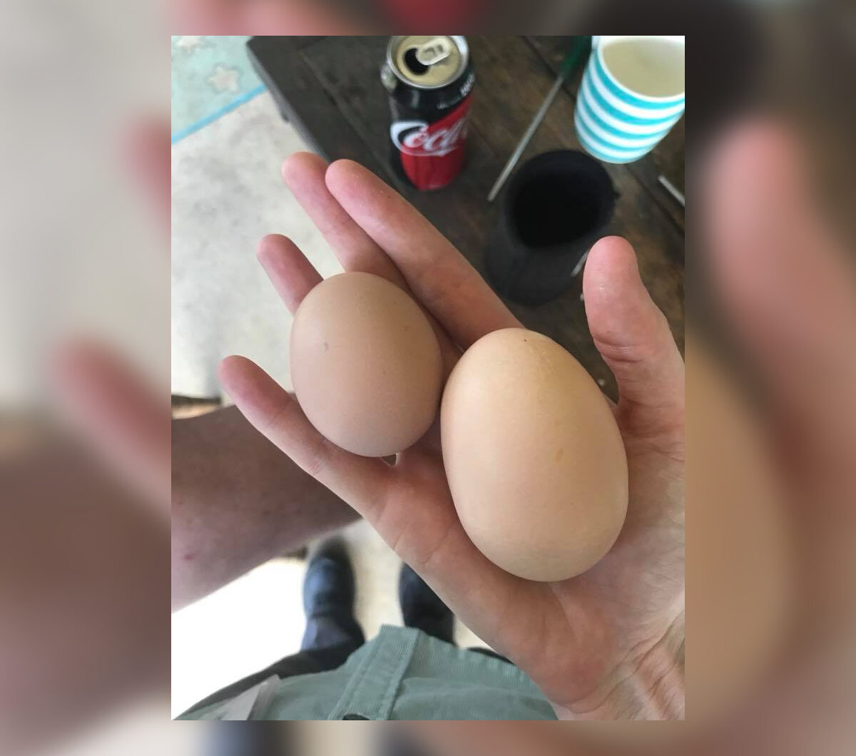 Internauci zaczęli zamieszczać pod postem inne zdjęcia ogromnych jaj