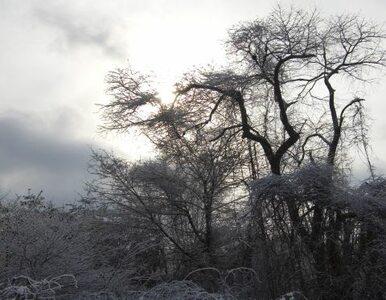Do Polski przyszła jesień? Możliwy deszcz ze śniegiem