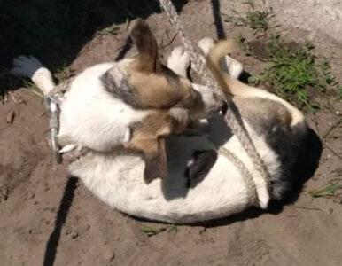 Łódzkie. Dramatyczna walka o życie psa. Przez kilka dni był uwięziony w...
