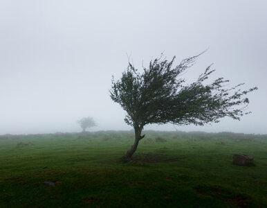 Silny wiatr nie odpuszcza. IMGW wydaje ostrzeżenia