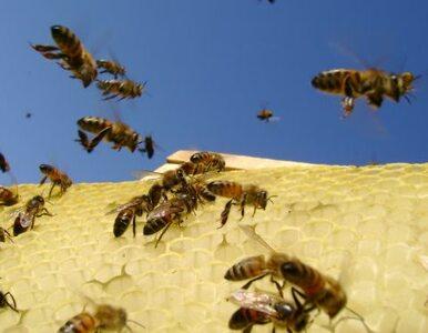 W Krakowie chcą walczyć z bezrobociem... pszczołami