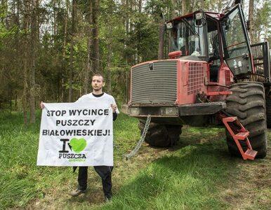 """Ekolodzy blokowali wycinkę Puszczy Białowieskiej. """"Ciężki sprzęt..."""