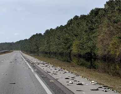 Usuwanie ryb z autostrady po huraganie Florence