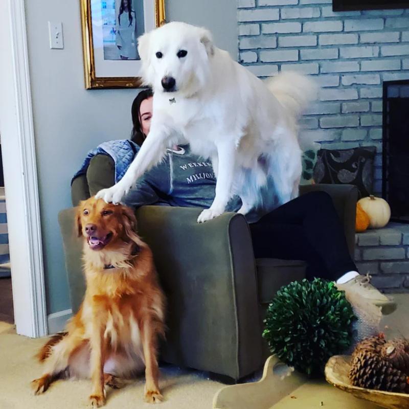 """Ten pies nie cieszy się z obecności """"młodszego brata"""""""