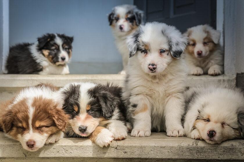 Psy, zdjęcie ilustracyjne