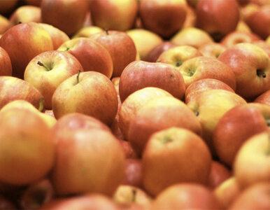 Sawicki: Jeść 4,5 kg jabłek zamiast bananów i po problemie