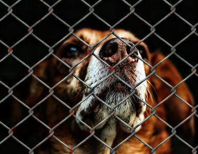 Zwierzęta też potrzebują tarczy antykryzysowej