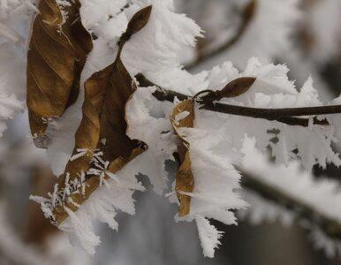 Wiosna w odwrocie. Śnieg na południu Polski