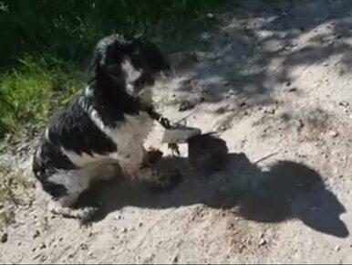 Znalazła porzuconego psa. Do szyi miał przywiązany ciężarek