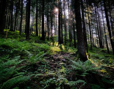 Naukowcy nie mają złudzeń. Nowe dane dotyczące polskich lasów