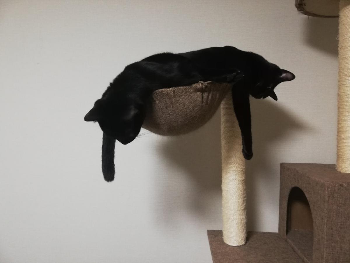 Wasz zwierzaki też tak śpią?