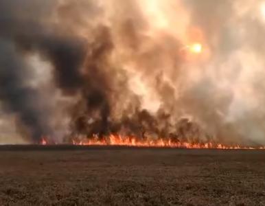 Płonie Biebrzański Park Narodowy. Jest jasna deklaracja ministra środowiska