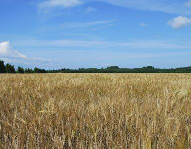 PSL szykuje zmiany. Chce chronić polskie grunty przed zagranicznym wykupem
