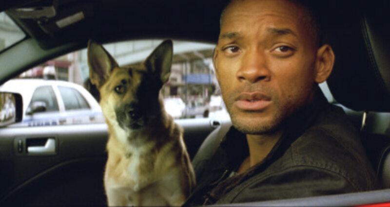 """To kadr z filmu """"Jestem legendą"""" z 2007 roku. Will Smith grał Roberta Neville'a, a pies ze zdjęcia nazywał się:"""